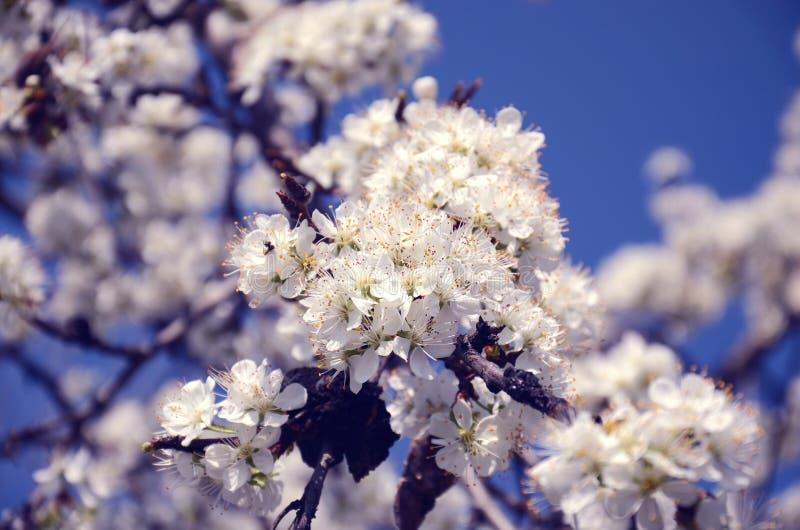 Molti fiori bianchi come la neve immagine stock
