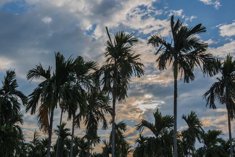 Molti piantano le palme nel giardino di mattina immagini stock libere da diritti