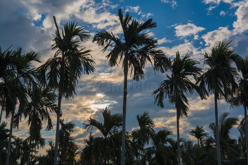 Molti piantano le palme nel giardino di mattina immagine stock libera da diritti