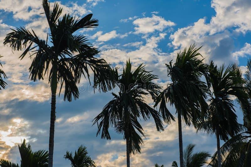 Molti piantano le palme nel giardino di mattina immagine stock