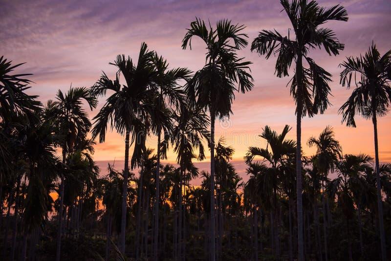 Molti piantano le palme nel giardino di mattina immagini stock