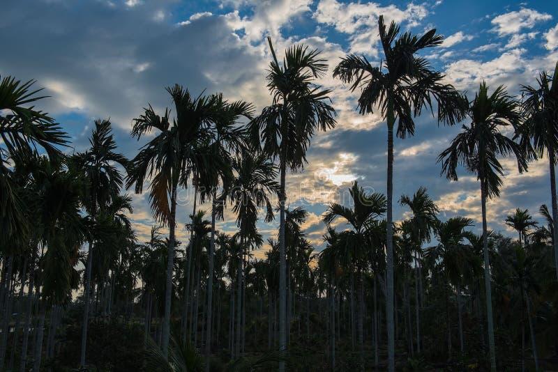 Molti piantano le palme nel giardino di mattina fotografia stock libera da diritti