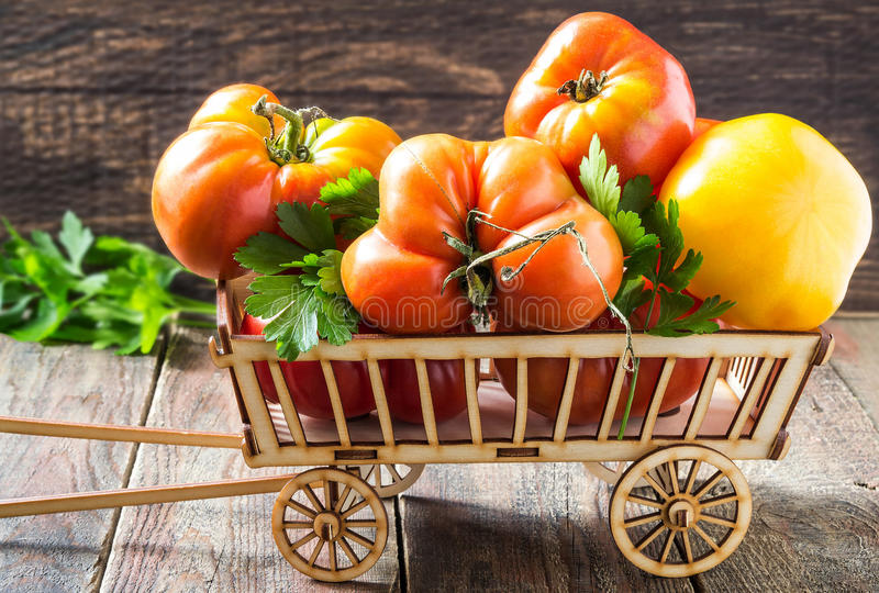 Molti pomodori maturi e prezzemolo in un carretto immagine stock