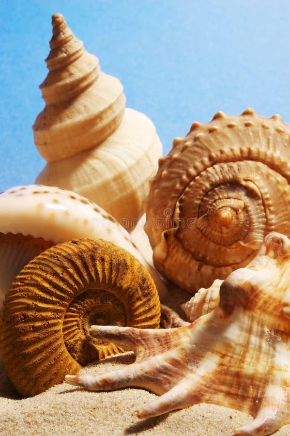 Molti seashells fotografia stock