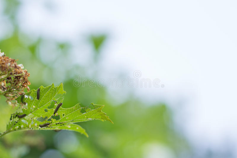Molti trattori a cingoli mangiano le foglie immagini stock libere da diritti