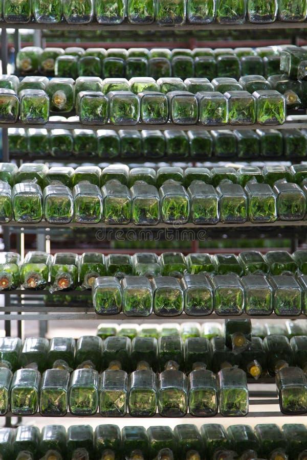 Moltiplicazione delle piante nella bottiglia di vetro fotografie stock