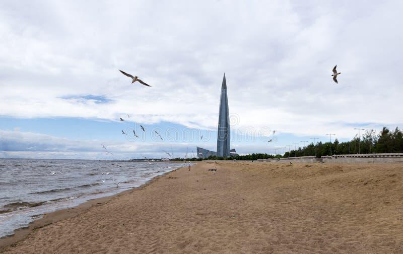 Moltitudine di gabbiani sopra la spiaggia, il golfo di Finlandia, St Peter immagini stock