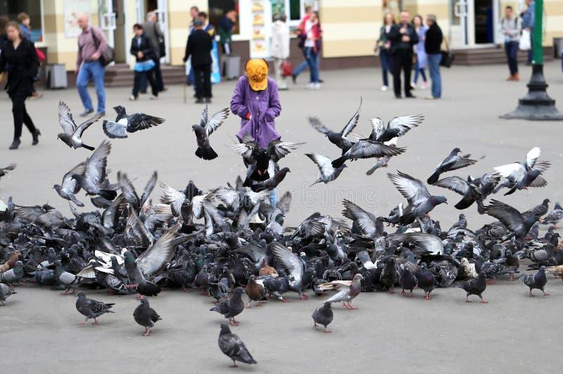 Moltitudine di piccioni fotografia stock
