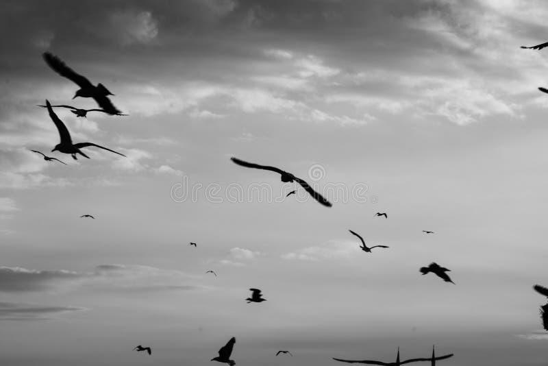 Moltitudine di piccioni contro il cielo con le nuvole fotografia stock