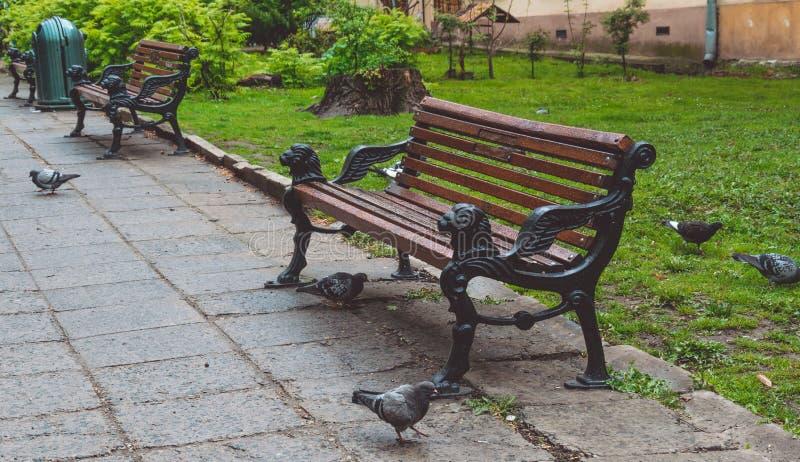 Moltitudine di piccioni in un parco abbandonato Cammini intorno alla città di Leopoli, Ucraina immagini stock