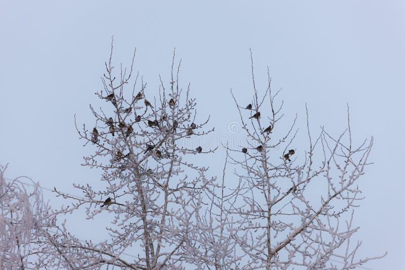 Moltitudine di snowbirds immagini stock