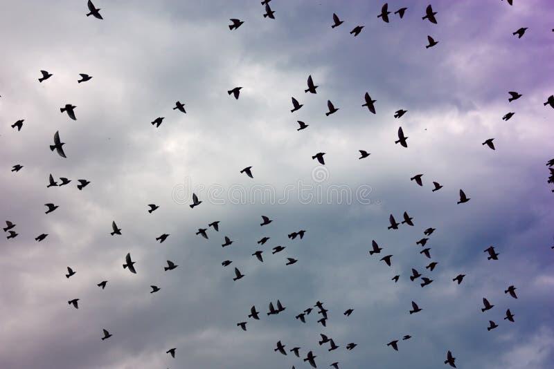 Moltitudine di uccelli fotografia stock libera da diritti