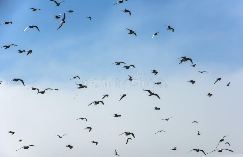 Moltitudine di uccelli marini immagini stock libere da diritti