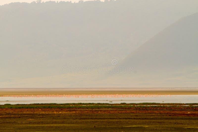 Moltitudini di fenicotteri minori in cratere di Ngorongoro, Tanzania immagine stock