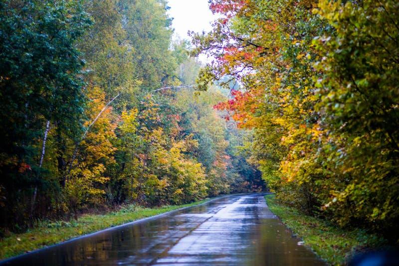 Molto bello autunno luminoso fotografie stock