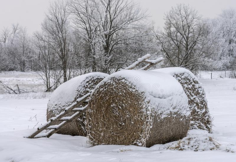 Molto fieno rotondo nella foresta di inverno, trovantesi sotto la neve, un'agricoltura rurale del paesaggio fotografia stock libera da diritti