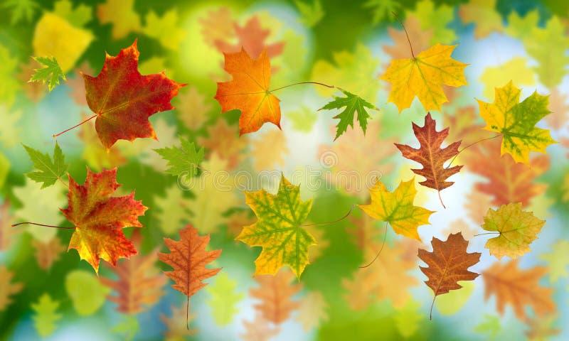 Download Molto Foglia Di Autunno Su Un Primo Piano Verde Del Fondo Immagine Stock - Immagine di closeup, isolamento: 56881269