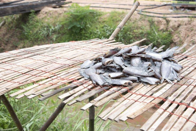 Molto il pesce salato secco ha chiamato & x22; Pectoralis& x22 di Trichogaster; sullo strato di bambù, pesce senza testa sullo st immagini stock libere da diritti