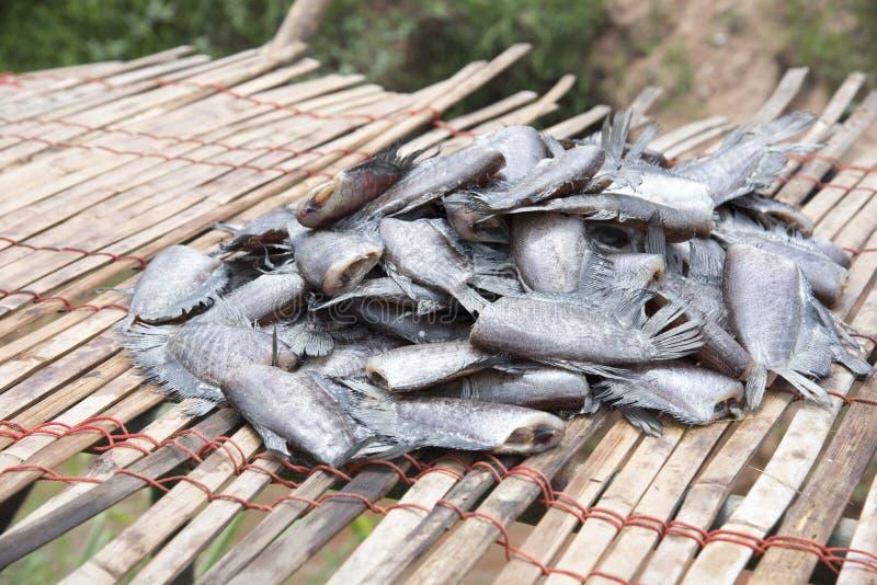 Molto il pesce salato secco ha chiamato & x22; Pectoralis& x22 di Trichogaster; sullo strato di bambù, pesce senza testa sullo st fotografia stock libera da diritti