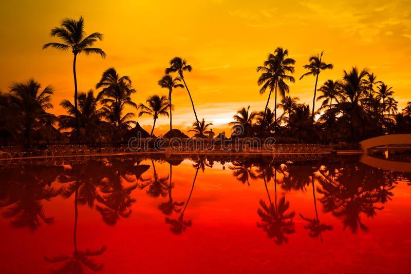 Molto palma nera su una notte dell'arancio della spiaggia di notte immagine stock