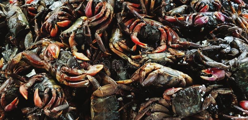 Molto piccolo granchio salato nero fresco per la cottura alimento e della vendita nel mercato dei frutti di mare fotografia stock libera da diritti