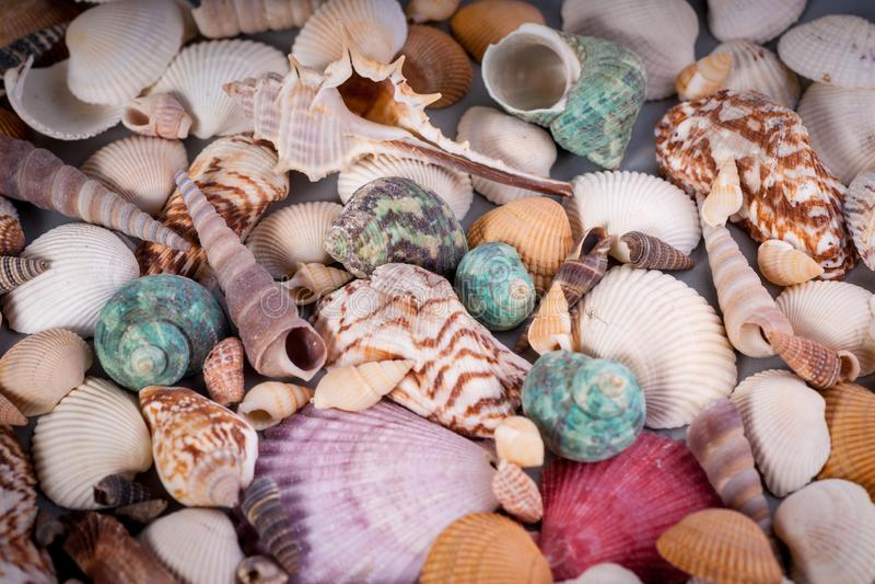 Molusce变化-海洋生活 免版税图库摄影
