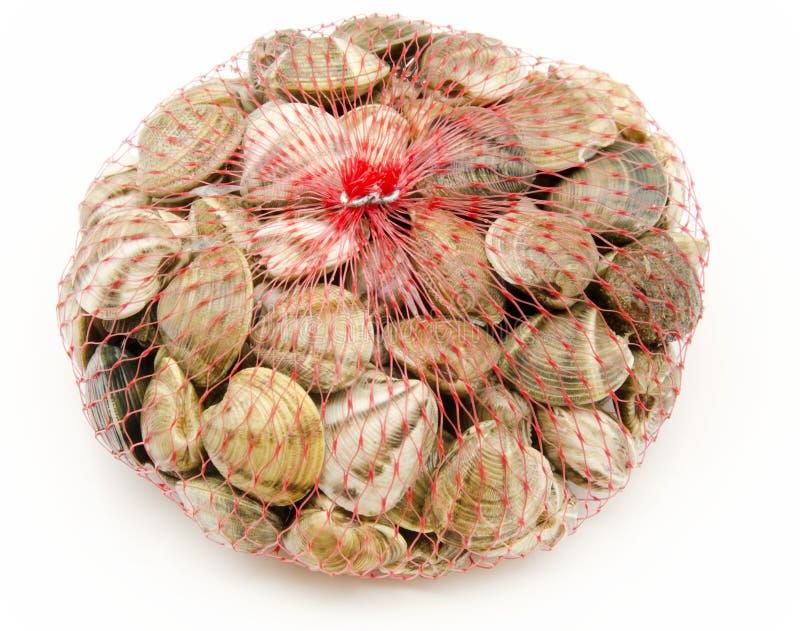 Download Moluscos imagem de stock. Imagem de fresco, seafood, fundo - 26520467