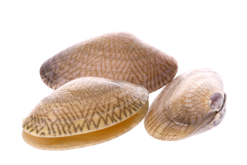Moluscos comestíveis vivos macro fotografia de stock