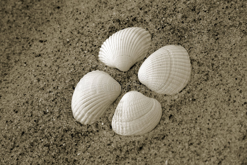 Moluscos do escudo do mar fotografia de stock