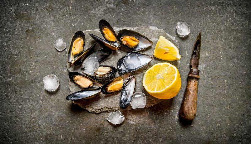 Moluscos frescos com limão e gelo em um suporte de pedra fotos de stock