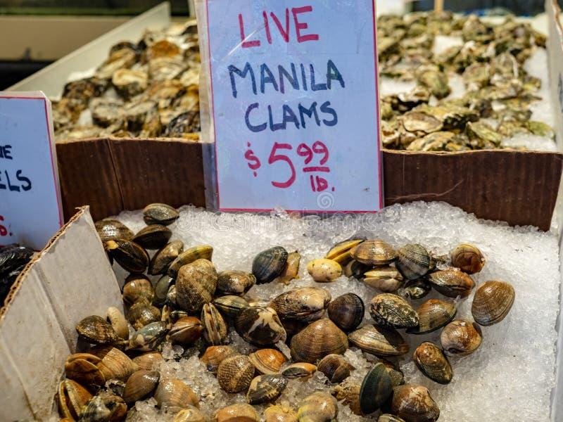 Moluscos vivos de manila no gelo para a venda para 5 99 USD no mercado dos fishermans fotografia de stock