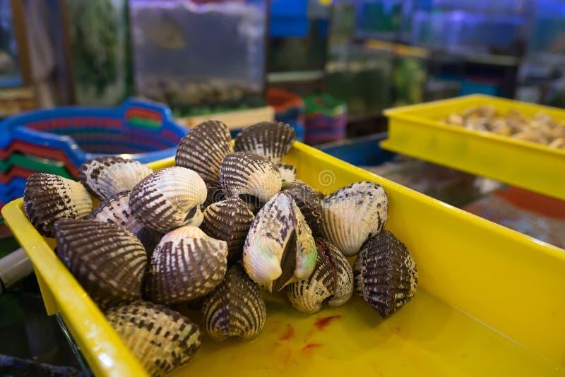 Moluscos vivos frescos imagem de stock