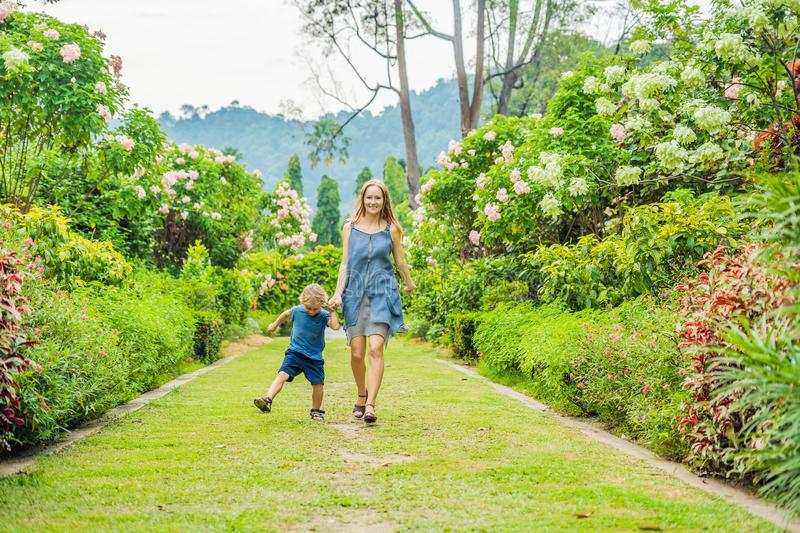 Mom and son are running around in the blooming garden. Happy family life style concept royalty free stock image