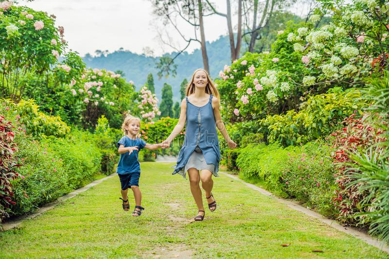 Mom and son are running around in the blooming garden. Happy family life style concept stock photos
