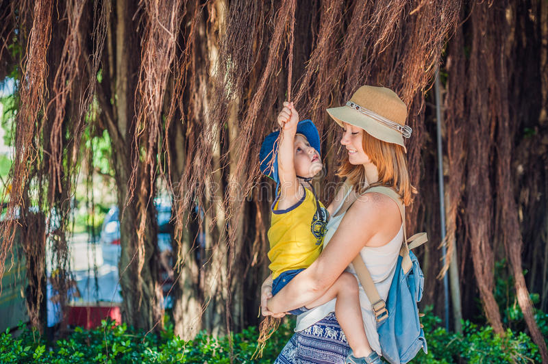 Mom and son on Vietnam travelers are on the background Beautiful tree with aerial roots stock photos
