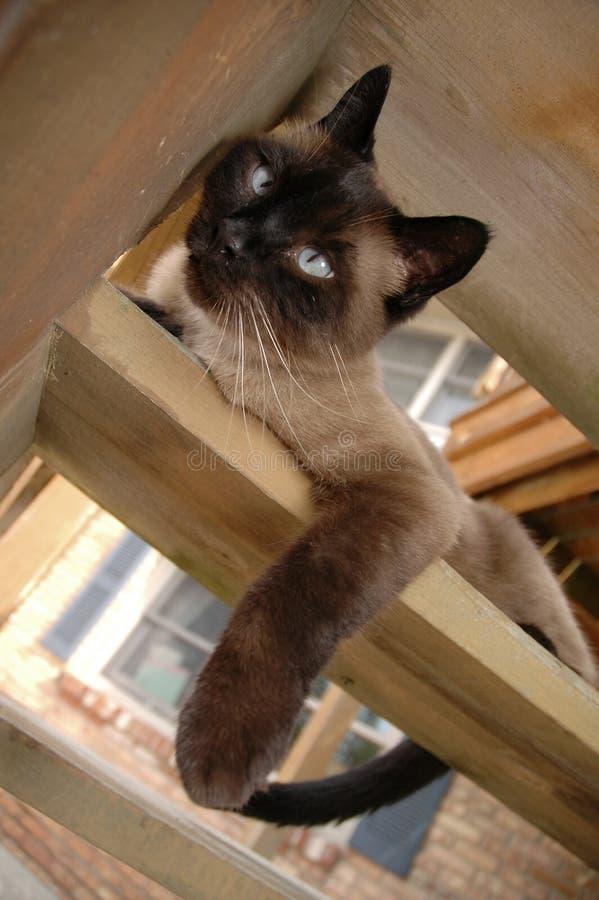Download Moment arkivfoto. Bild av nätt, katter, stående, ögon, skyddsremsa - 983078
