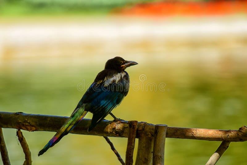 moment pokój dla uroczego ptaka na wiosna dniu obrazy stock