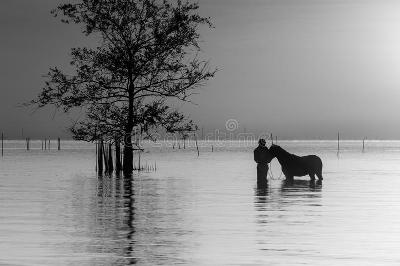 Moment tendre avec le cheval image stock
