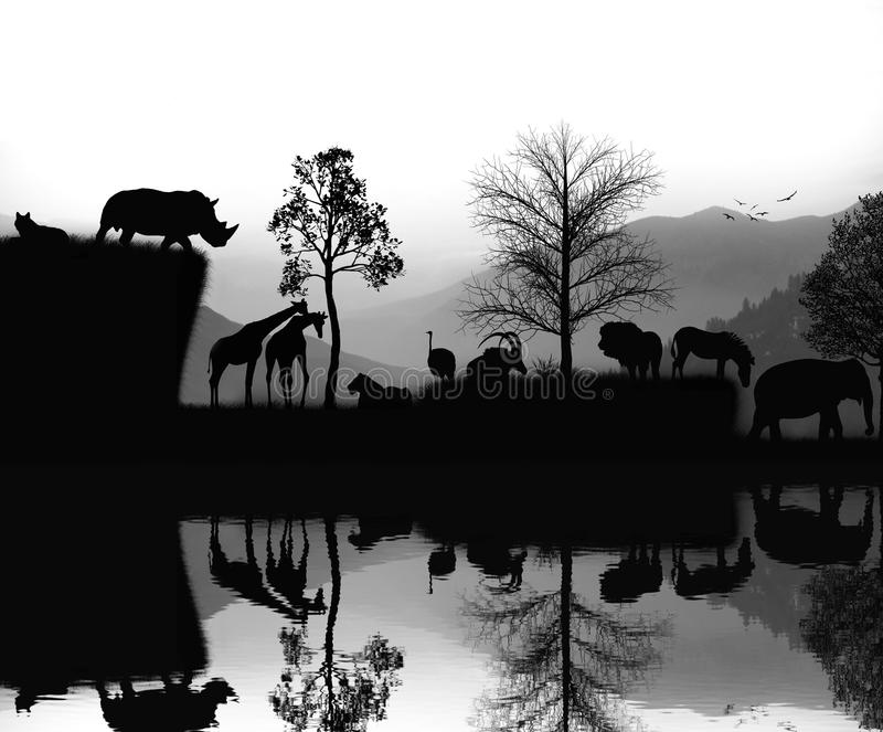 The African animals landscape moment stock photography
