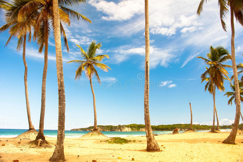 Moment tropical photographie stock