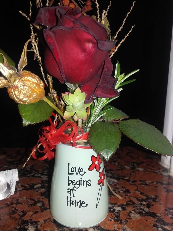 Momento bonito em casa com rosas fotografia de stock royalty free