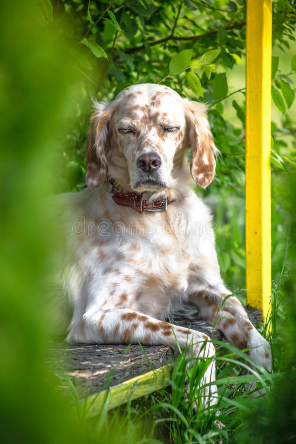 Momento da meditação do cão imagem de stock royalty free