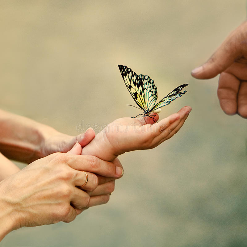 Momento di Familiy con la farfalla fotografia stock libera da diritti