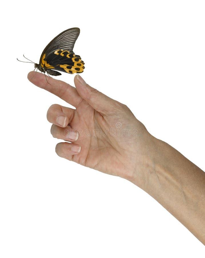 Momento do Mindfulness com borboleta dourada fotos de stock