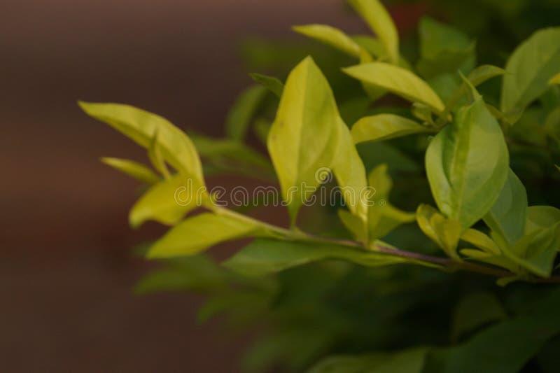 Momentos de la imagen de la flor de la naturaleza los mejores fotos de archivo libres de regalías