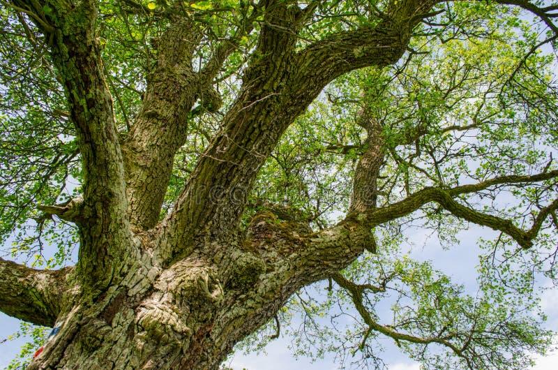 Momentos hermosos debajo del árbol en el campo foto de archivo