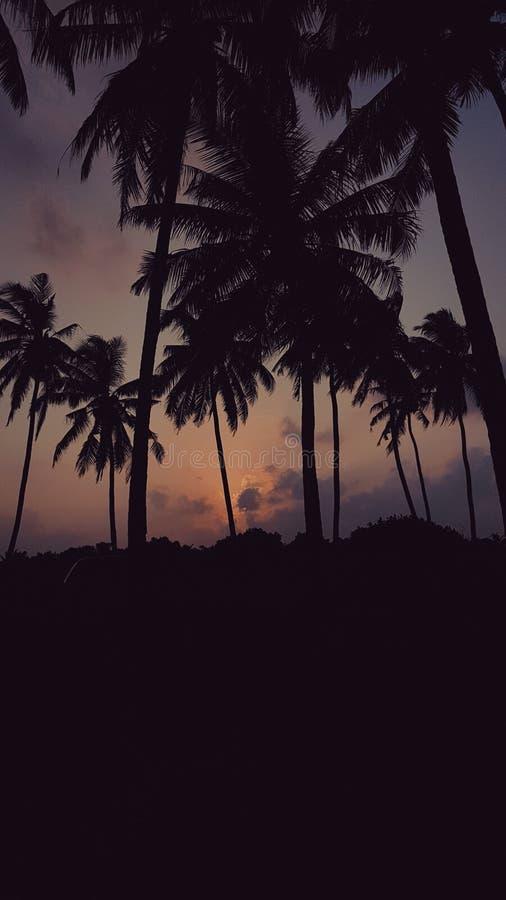 Beautiful evening 2 stock images