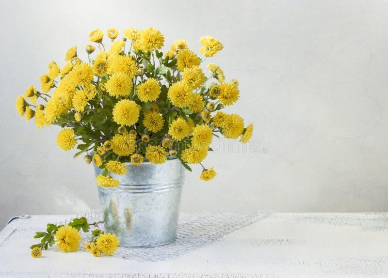 Momias amarillas hermosas foto de archivo libre de regalías