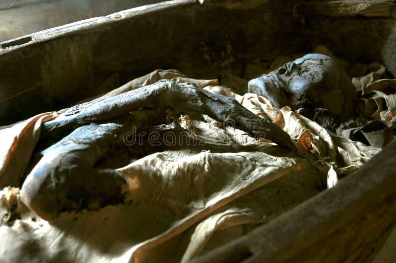 Momie égyptienne dans un musée   photo libre de droits