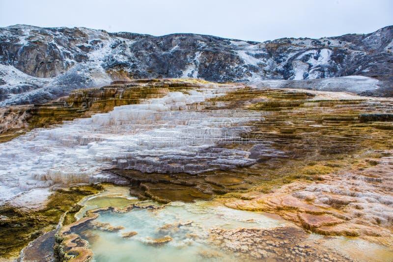 Mommoth varm vår i Yellowstone NationalPark royaltyfri bild